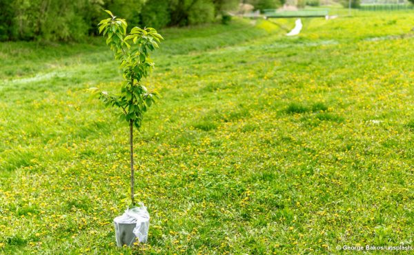 EVN-Baumspende-Aktion